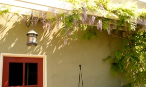 Wisteria and House